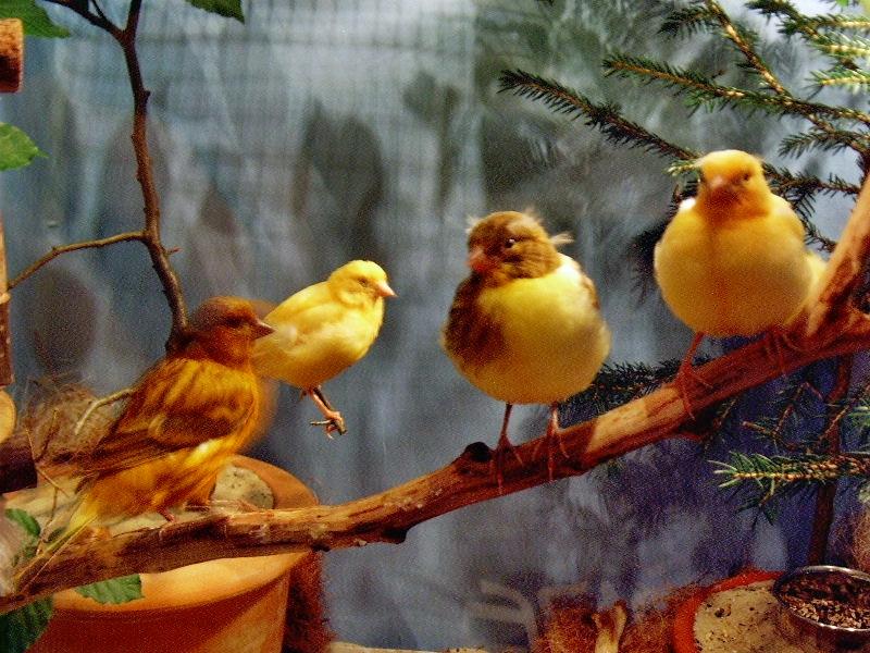 vögel füttern wie lange